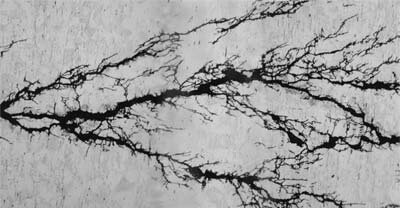 Figure 2. Microphotograph of stress corrosion cracking showing branching.