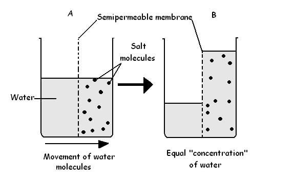 Figure 1. Process of osmosis.